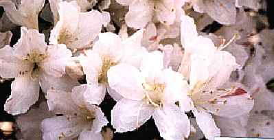 Narumishibori