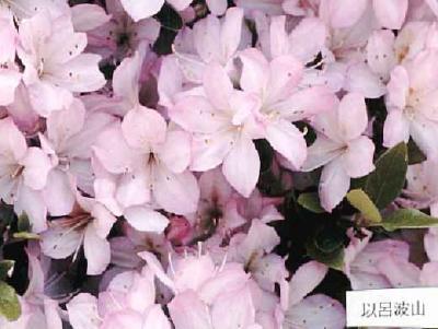 Irohayama