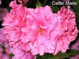 'Caitlin Marie'