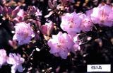 'Ainoshima'