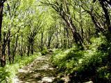 The Path 2