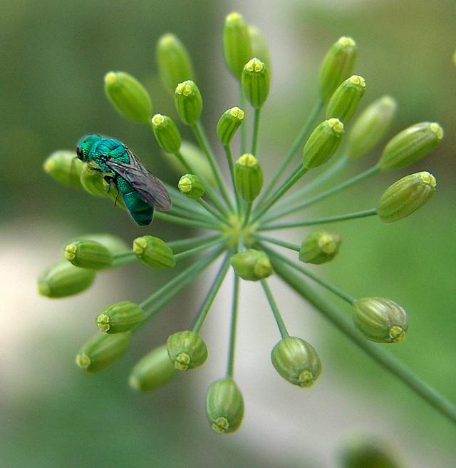 Alien Bug 2
