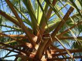 06 11 05, Palm tree.  fz20.jpg