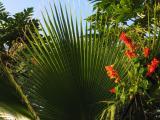 Natural fan