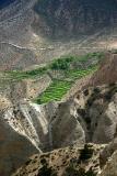 Green fields of Samar