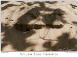 24Jun05 Natural Sand Formation