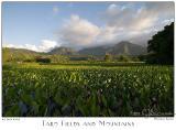 25Jun05 Taro Fields and Mountains