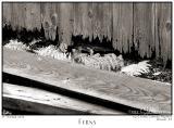 07Oct05 Ferns - 6163