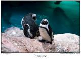22Oct05 Penguins - 6794