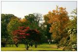 Autuum in the park II