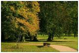 Autuum in the park III