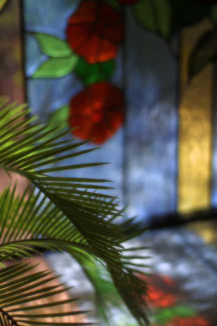 fern and window