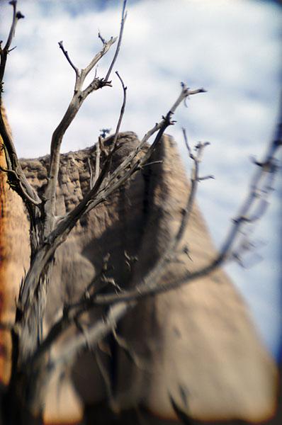 tree mountain- abiquiu, new mexico