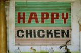 happy chicken, pondicherry