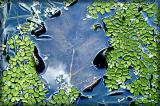 pond, auroville