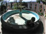 fuente seco, guanajuato