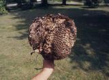 Beehive, Indiana (1991)