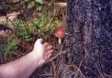 Mushroom, Oaxaca, Mexico (2003)