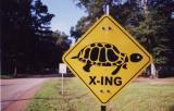Turtle Uncertain Tx.jpg