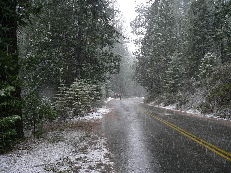 The road to Mariposa Grove