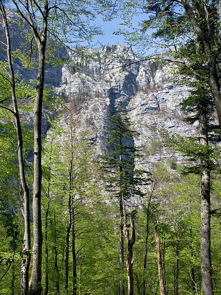 Bohinj Valley