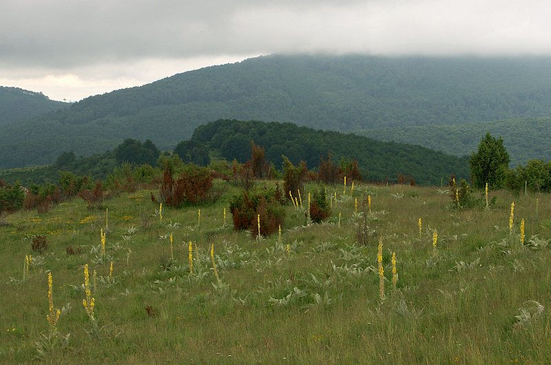 Sredna Gora Mountains