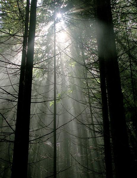 Woods near Kranjska Gora