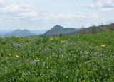 Meadow on Lubnik Mountain, near Škofja Loka