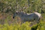 horsewhite1.jpg