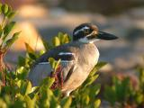 Birds from Top End