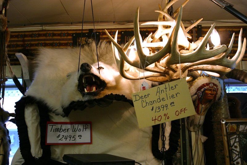 Deer Antler Chandelier and wolf carcass