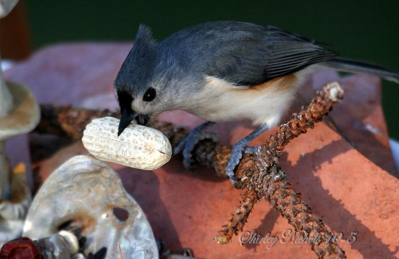 Lady loves nuts.jpg