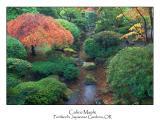 Calico Maple.jpg
