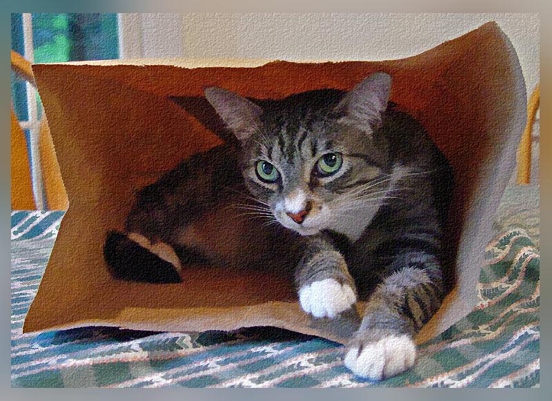 I bagged Louie!
