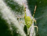 Same critter as previous image