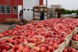 Have a peach!