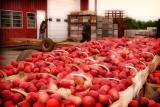 Cooley' s Peach Farm