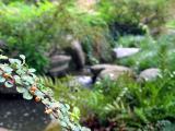 9/17/2005 - Garden of Peace