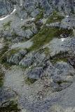 Alpine Rocks & Plants