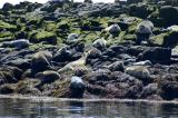 Seal Watch