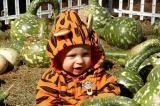 Brooks in the gourd patch
