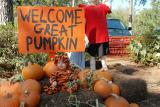 Come on Great Pumpkin