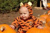 Tigger in the pumpkin patch