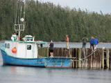 Mackeral Fishing