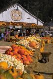 arata pumpkin farm