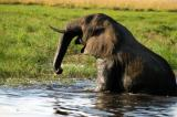 Elephant climbing out of the river