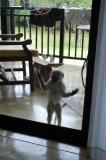 Naughty monkey on the balcony