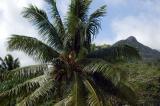 Palm and mountain peak, Beau Vallon