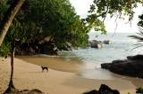 Dog in a small cove north of Beau Vallon