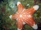 Sea Star, Mahé Island
